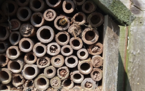 Footer-Bees